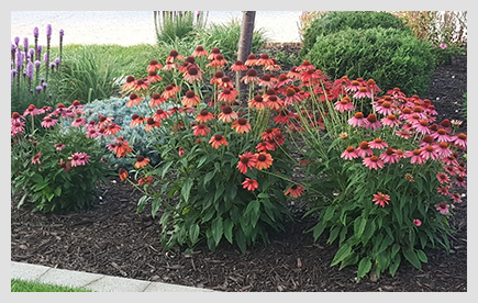 Beautiful flower bed